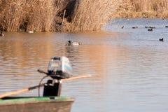 Wild ducks on the lake. Stock Photos