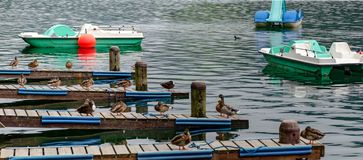 Wild ducks on on landing stages. Pedal boats and wild ducks on on landing stages at the Zeller lake of Salzburg, Austria Stock Photos