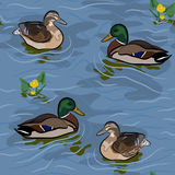 Wild ducks seamless texture Royalty Free Stock Photo