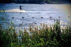 Wild ducks and sport Royalty Free Stock Photos