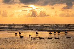 Wild ducks waiting for the end of storm on Baltic Stock Photos