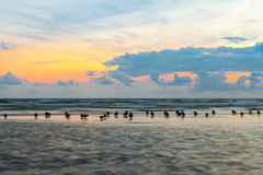Wild ducks waiting for the end of storm on Baltic Royalty Free Stock Images