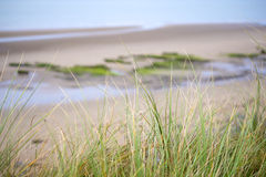 Wild dune grass in beal beach Stock Image