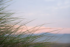 Wild dune grass in beal kerry Stock Photography