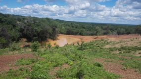 Wild ecosysteem stock afbeelding