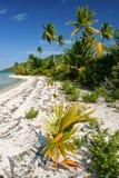 Wild eenzaam tropisch strand op Maupiti, Franse Poly Royalty-vrije Stock Afbeelding