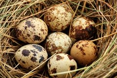 Wild eggs Royalty Free Stock Images