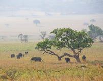 wild elefanter fotografering för bildbyråer