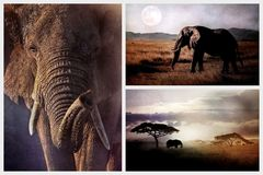 Wild elephant in the African savannah in the evening. African collage stock photo