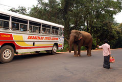 Wild Elephant, Bus and Man Royalty Free Stock Photos