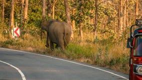 Wild elephant near vehicle on road. Furious Wild elephant near threeweel vehicle on roadside , maduruoya  srilanka Stock Photo