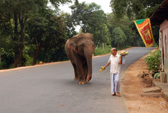Wild Elephant on the Road Stock Images