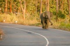 Wild elephant on road. Furious wild elephant on road , srilanka royalty free stock image