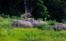 Wild elephants walking Stock Photo