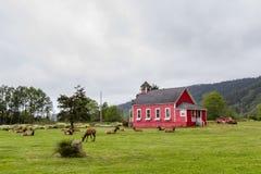 Wild elk at school royalty free stock images