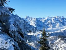 The wild emperor of the kaiser mountains in winter royalty free stock photography