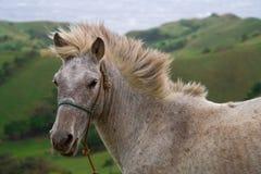 Wild en vrij paard Royalty-vrije Stock Afbeeldingen