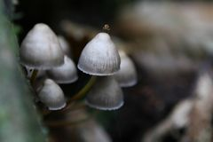 Wild english forest mushrooms growing in autumn Stock Photography