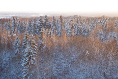 Wild evergreen forest covered with snow in winter. Shot in golden hour when sun was almost set Royalty Free Stock Image
