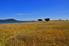 wild fält Arkivbild