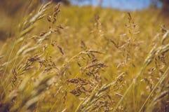 wild fält Arkivfoto