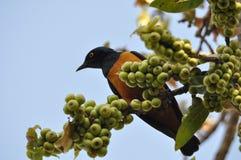 Wild fågel Arkivbild