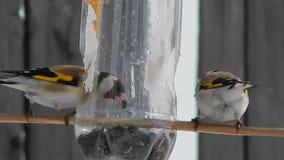 wild fågel arkivfilmer