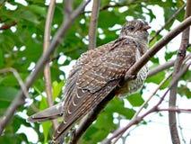 wild fågel Arkivfoton