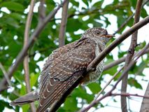wild fågel Royaltyfri Bild