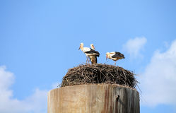 Wild fåglar Royaltyfria Foton
