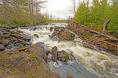 Wild Falls in the North Woods Royalty Free Stock Image