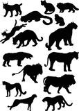 Wild Felidae silhouettes Stock Photos