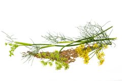 Wild fennel Royalty Free Stock Photography