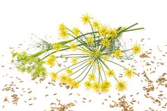 Wild fennel Stock Photos