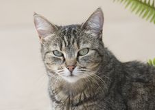 Wild feral cat Stock Photography