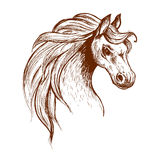 Wild feral horse in aggressive posture sketch. Angry brumby horse sketch icon of a head of wild and free-roaming feral horse in aggressive posture. Use as Stock Photos