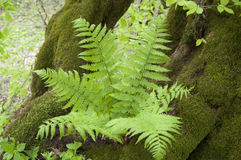Wild fern Stock Images