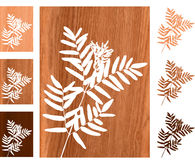 Wild fern on wooden background Stock Photos