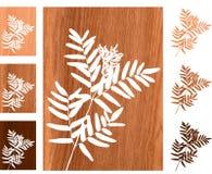 Wild fern on wooden background Stock Photos
