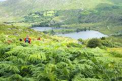 Wild ferns with hikers Stock Images