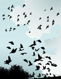 wild fåglar Royaltyfri Fotografi