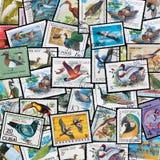 Wild fåglar Arkivfoto