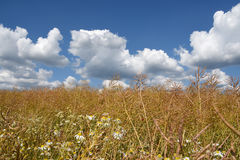 Wild field with blue sky and clouds, a natural background to commerciels. Stock Photo