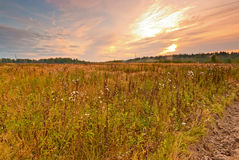 Wild field in central Russia Royalty Free Stock Photo