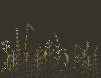 Wild Field Flowers and Grass on Black Background Royalty Free Stock Photography