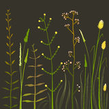 Wild Field Flowers and Grass on Black. Rustic colorful meadow growth illustration set. Vector EPS10 Royalty Free Stock Photos