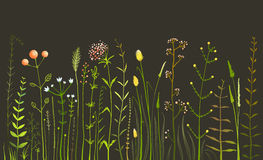 Wild Field Flowers and Grass on Black. Rustic colorful meadow growth illustration set. Vector EPS10 Stock Images