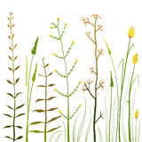 Wild Field Flowers and Grass on White Collection Royalty Free Stock Photography