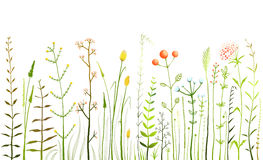 Wild Field Flowers and Grass on White Collection. Rustic colorful meadow growth illustration set. Vector EPS10 Royalty Free Stock Photo