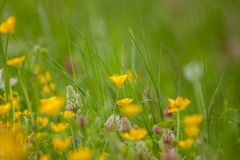 Wild field flowers on green grass background Royalty Free Stock Photos
